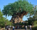 forlystelsesparker-i-orlando-animal-kingdom-tree-of-life