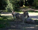 forlystelsesparker-i-orlando-animal-kingdom